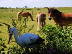 Pferde hinter dem Gartenzaun vom Ferienhaus Kolks Huus Carolinensiel Harlesiel, einfach schöne Ferien mit Ruhe, Natur und freiem Blick